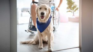 Service Animals and Public Facilities